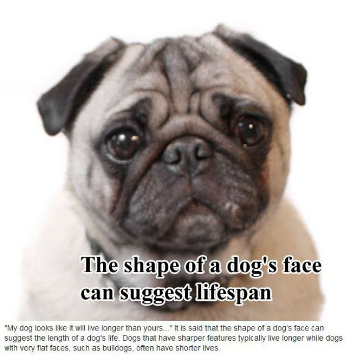 Dogs faces determine life span