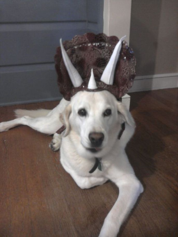 Happy Costume Dog