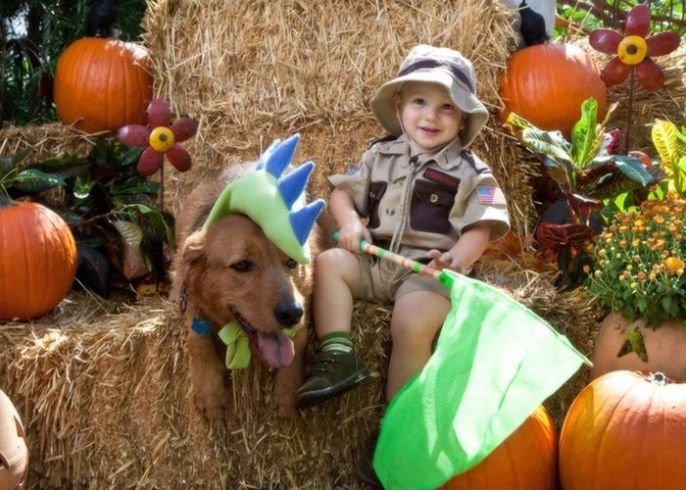 Dino Dog at the pumpkin patch