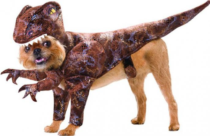 Awesome Dog Costume