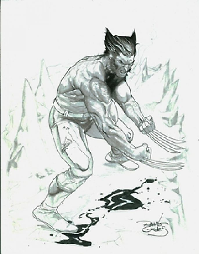 black and white wolverine