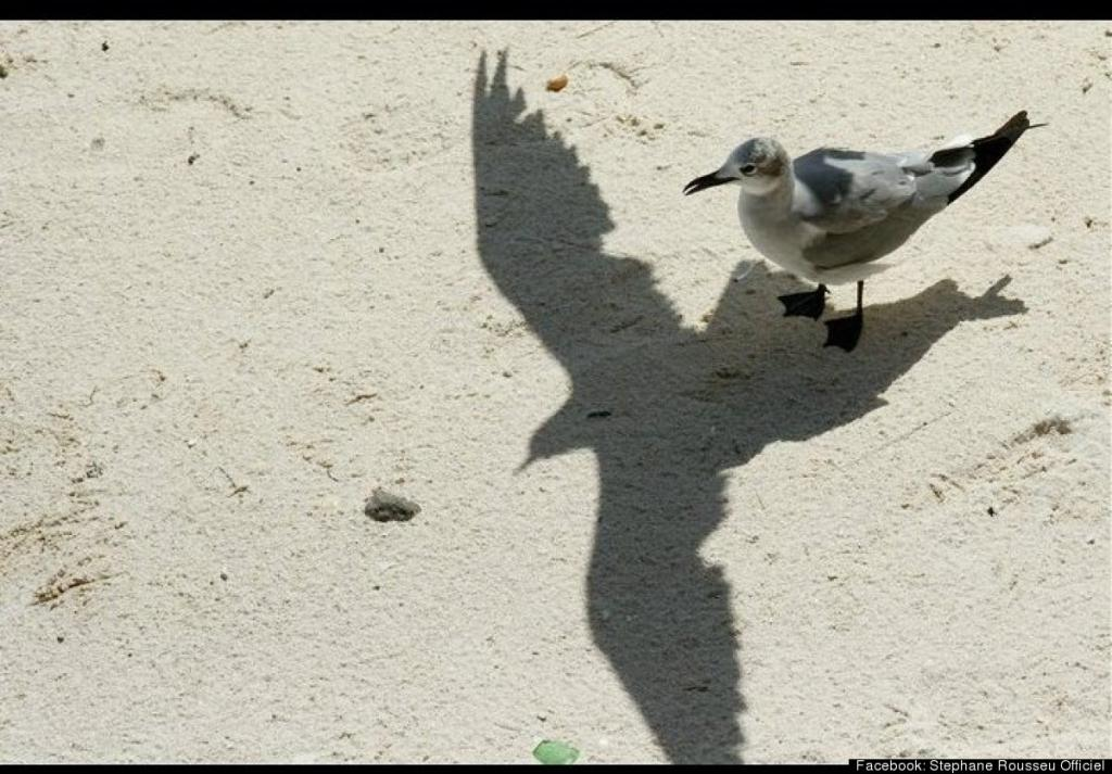Epic Bird Shadow