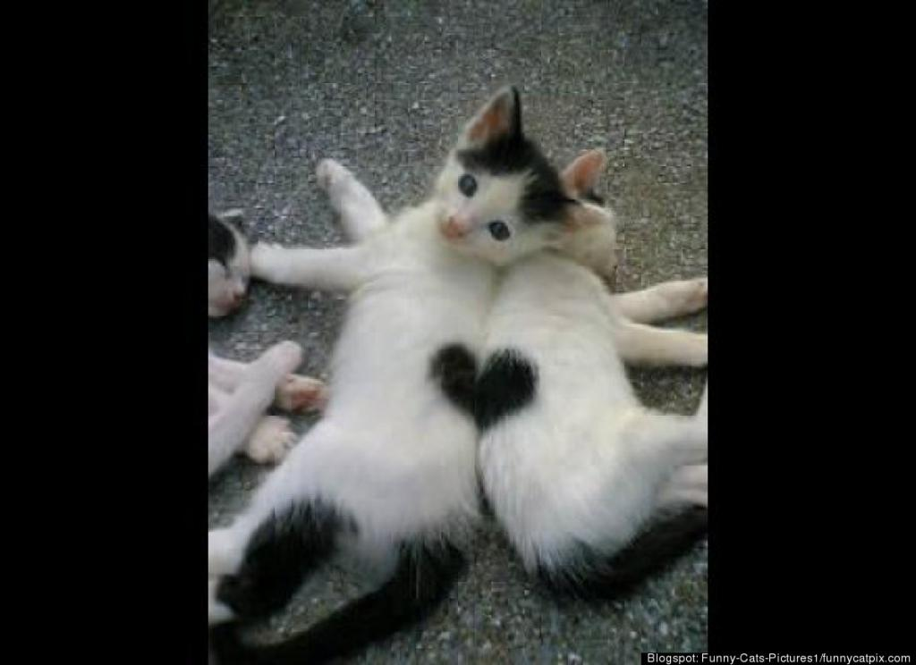 Double Kitty Heart