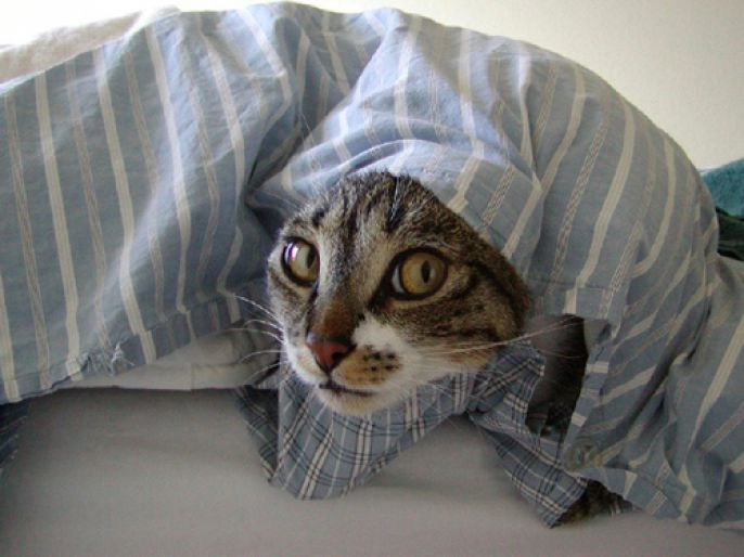 wrapped up cat