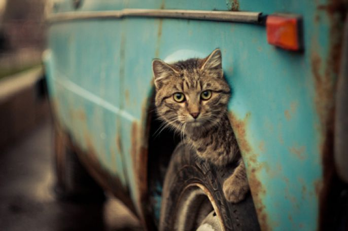 Kitty on a car wheel