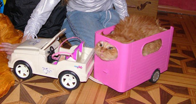car carrier cat