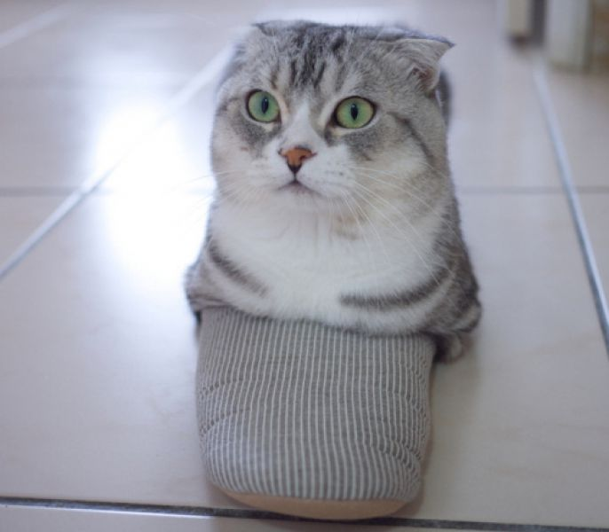 cat in a sandal