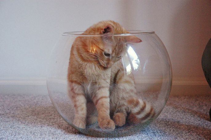 fishbowl kitty