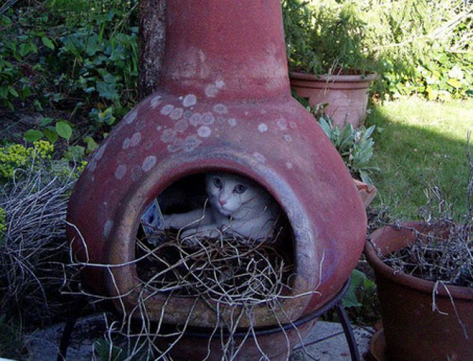 Cat in a pot