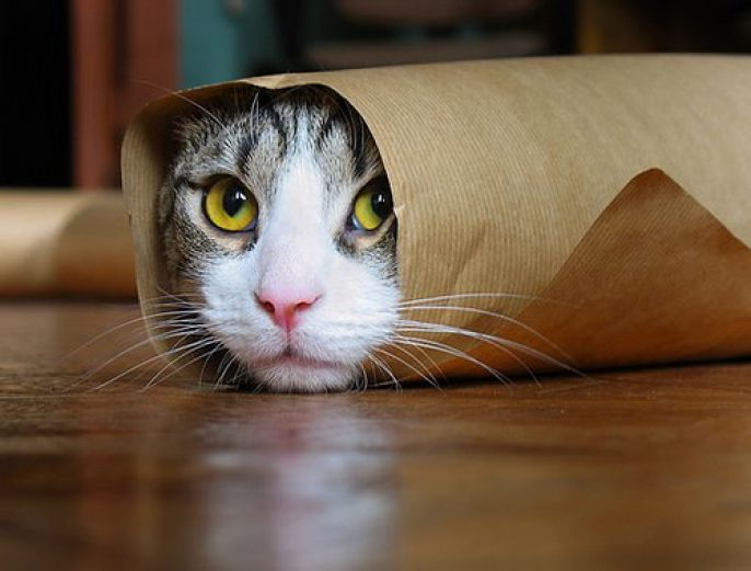 cat wrapped in paper