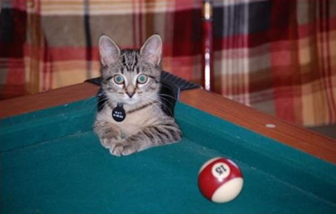 Cat in the pool table corner pocket