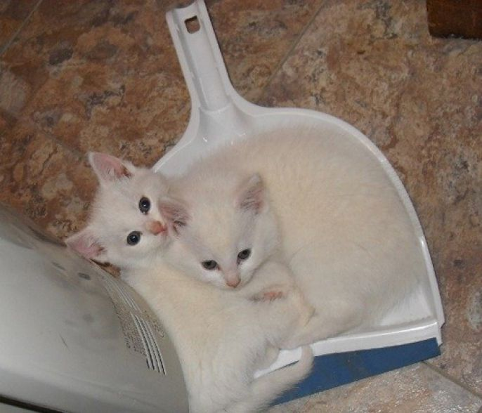 dustpan kitties