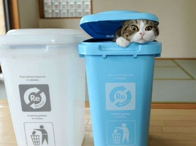 recyclable cat