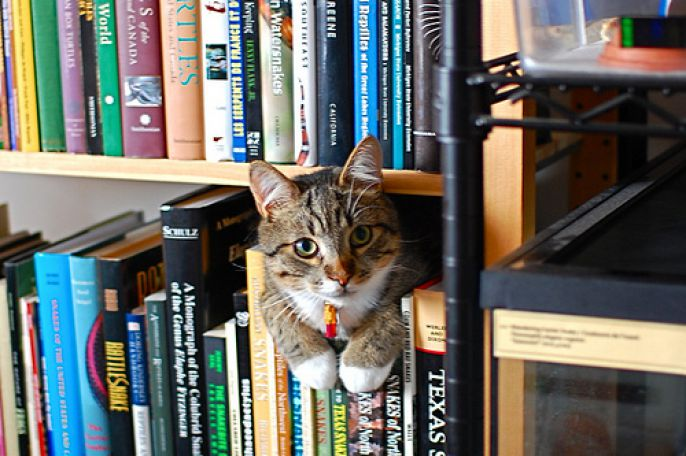 Cat on the book shelf