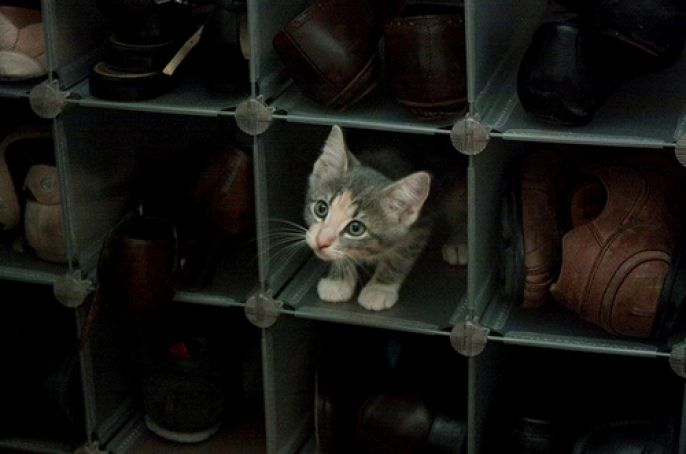 shoe organizer kitty