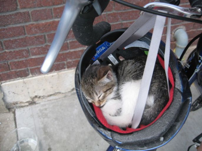 Kitty in a bike helmet