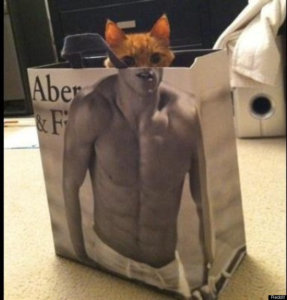 Cat With Abs