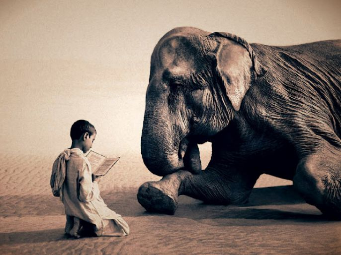 Boy Reads To Elephant