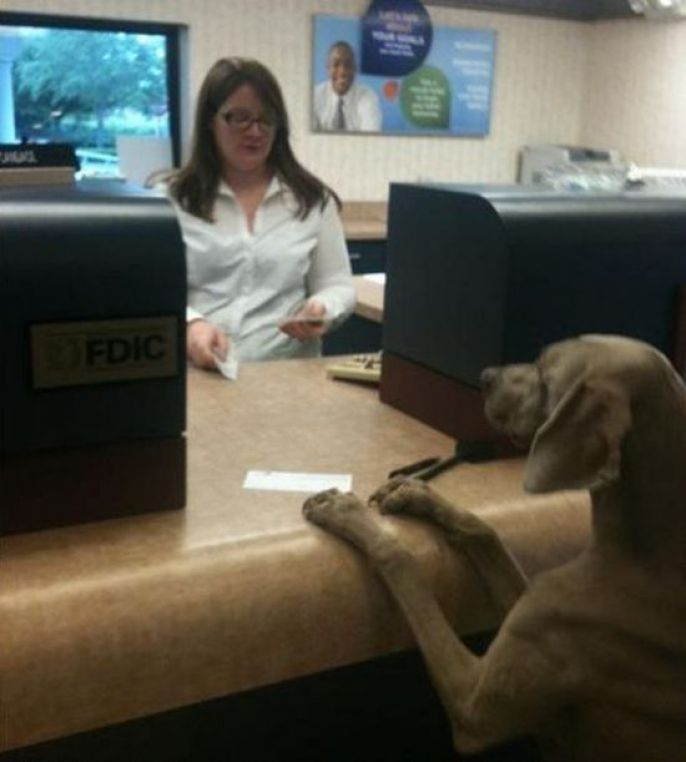 Dog At The Bank