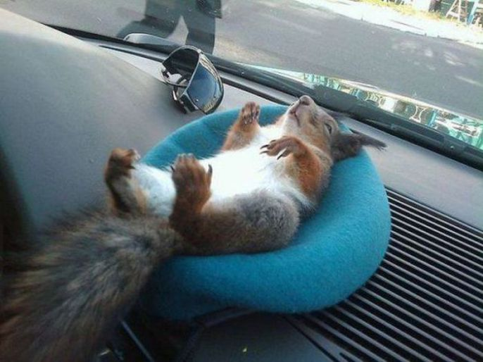 Relaxed Squirrel