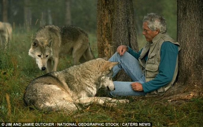 Relaxing with the wolves