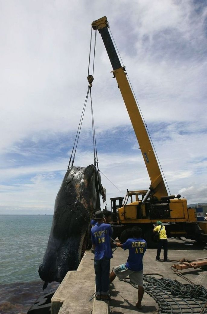 Lifting the giant whale