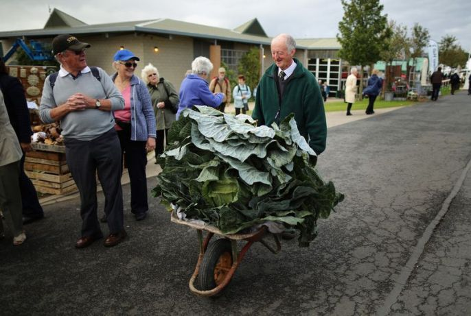 Lettuce in a wheelbarrow