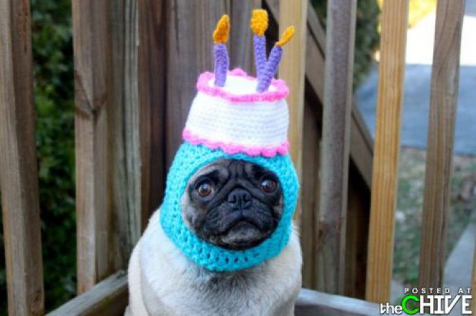 Birthday Cake Pug Hat