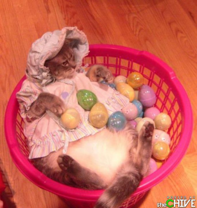 Kitty in an Easter basket