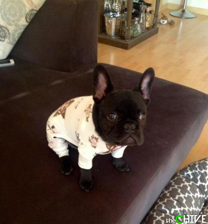 Dog In Pj's