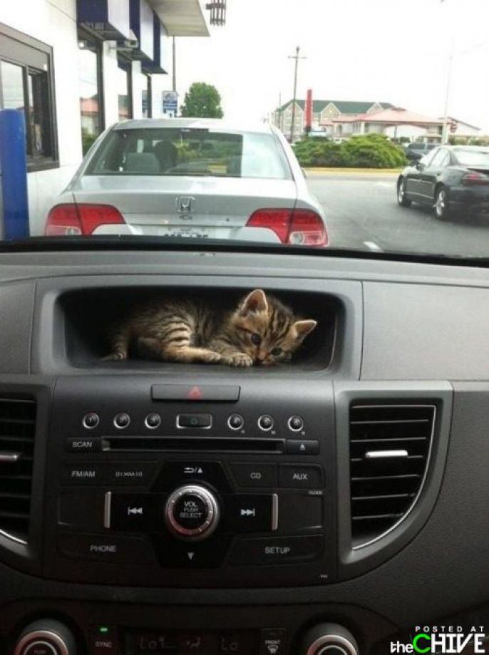 Kitty In Car Console