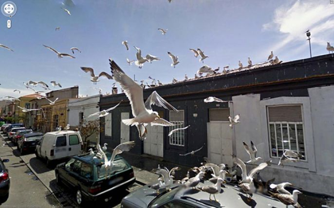 Tons of Seagulls