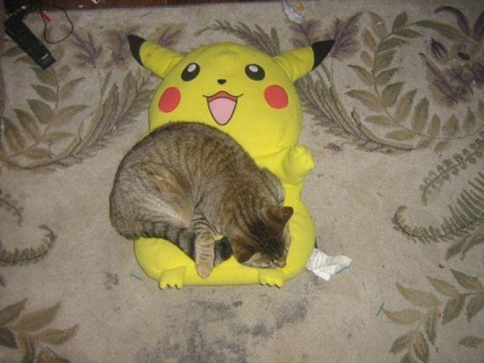 cat cuddles with pikachu