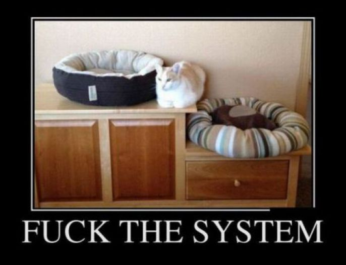 This Cat Gives No F*cks