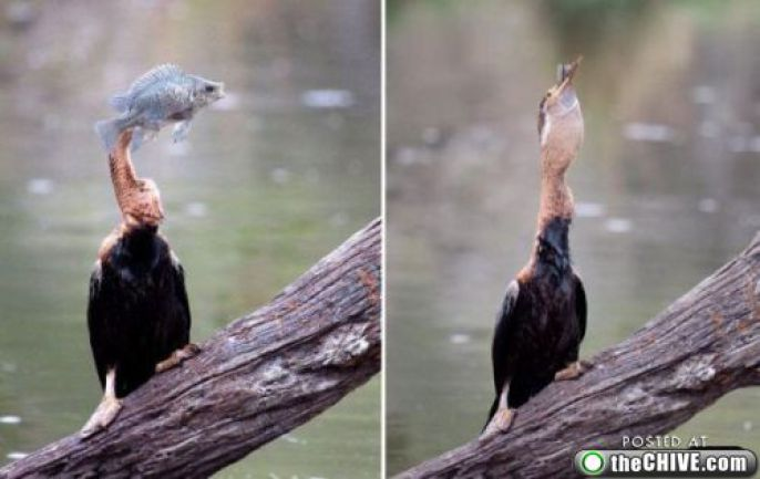 Fish Owned by Bird