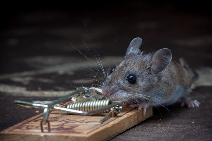 Outsmarting Mouse Trap