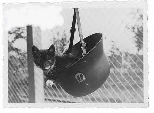 Kitty in a soldiers Helmet
