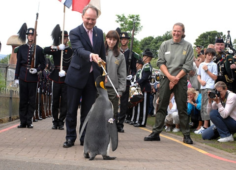 Norwegian Army Knighted This Penguin