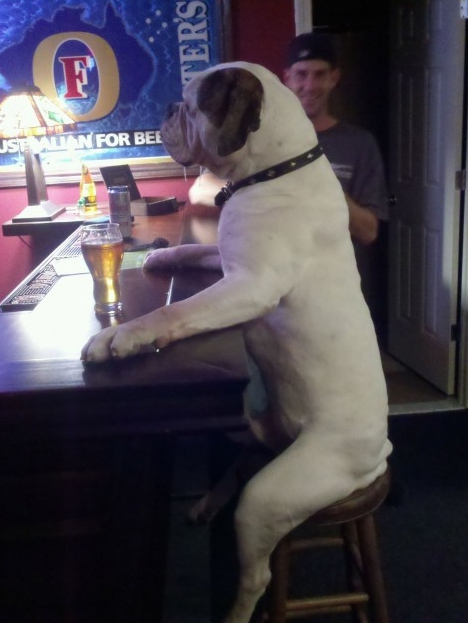 Dog At The Bar