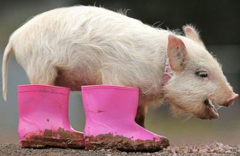 Pig Boots