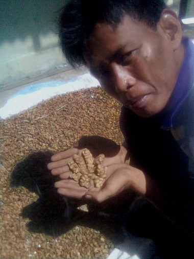 19. Kopi Luwak is the most expensive coffee in the world and sells for anywhere between $100-600/lb, with a specialty bl