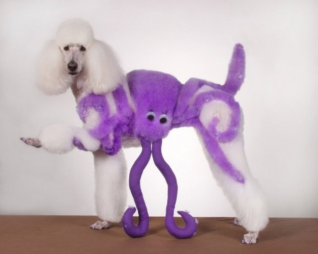 13 Poodles Who Know How To Party On Halloween от Helen за 03 oct 2012