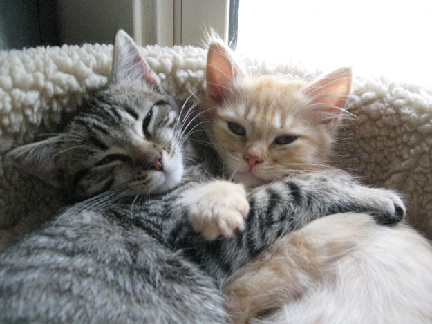 The 25 Most Important Kitten Hugging Techniques