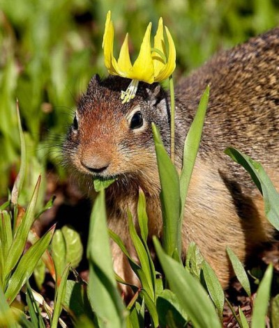 The Latest Fad Exposed: Hats on Squirrels!