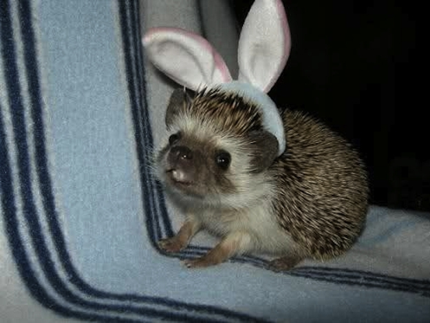 Forget the Easter bunny! Why not an Easter hedgehog?!