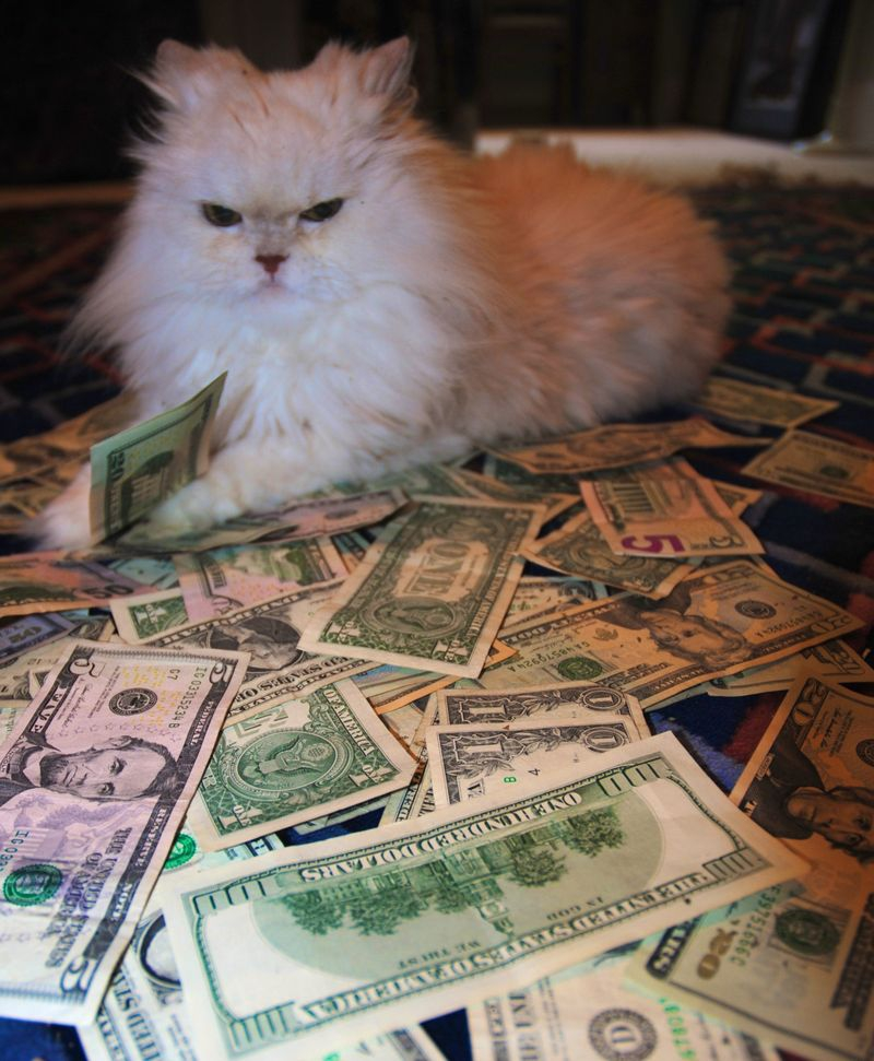 Cats and Money