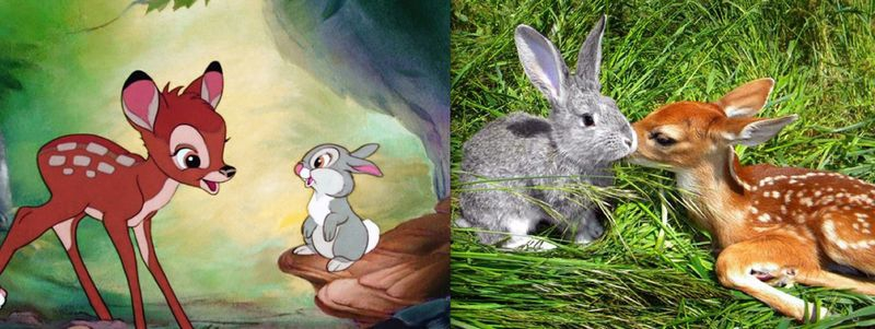Adorable Disney Animals Brought to Life от Helen за 22 oct 2012