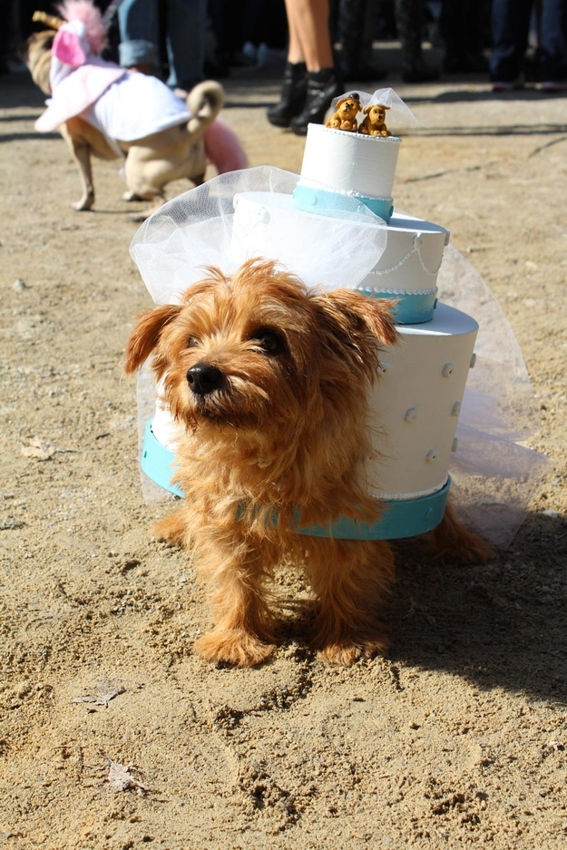 Cutest Puppy Costumes