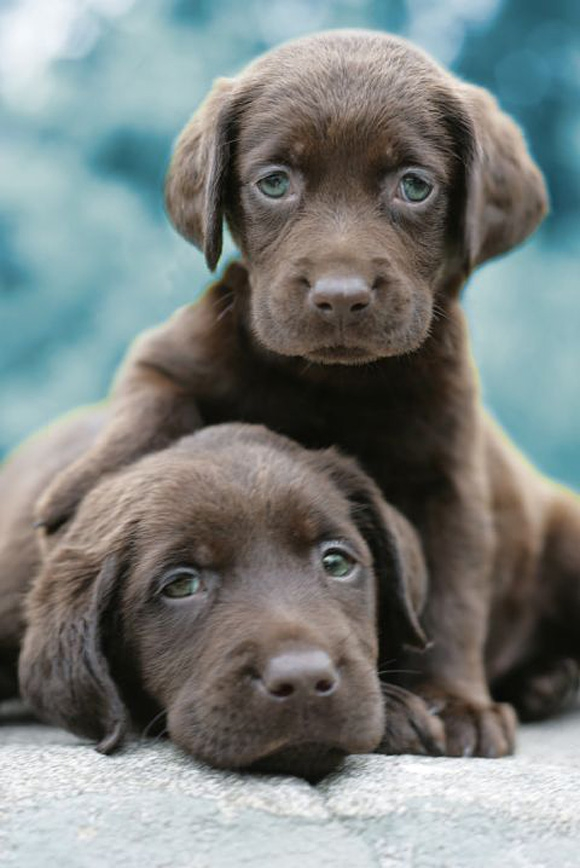 Puppies that will get you laid.