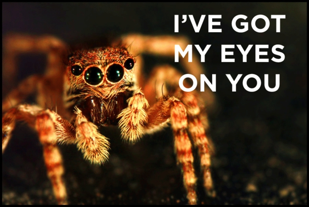 According to legend, if you see a spider on Halloween, it's actually the spirit of a loved one watching over you.